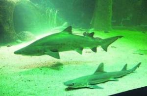 acuario o grove_2