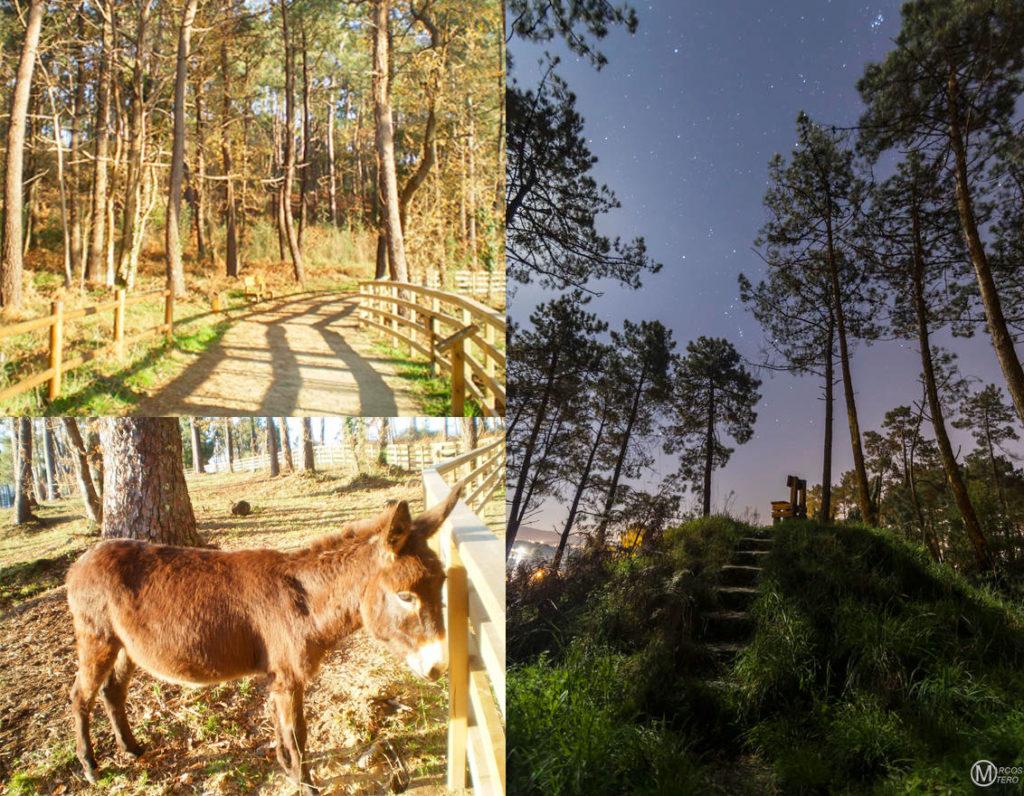 Parque forestal de la Isla de La Toja